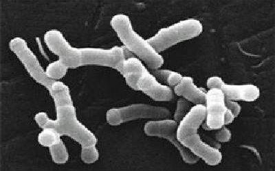 Influencia de la microbiota intestinal en el desarrollo del eczema