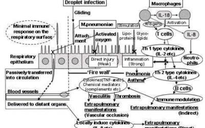 Diagnóstico de neumonía por Mycoplasma pneumoniae. Más difícil de lo que parece